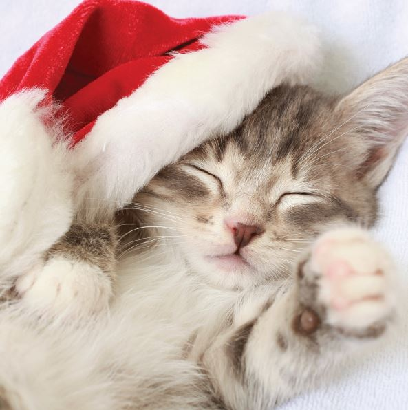 Cat Nap Christmas cards